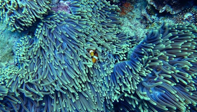 A close up of a coral