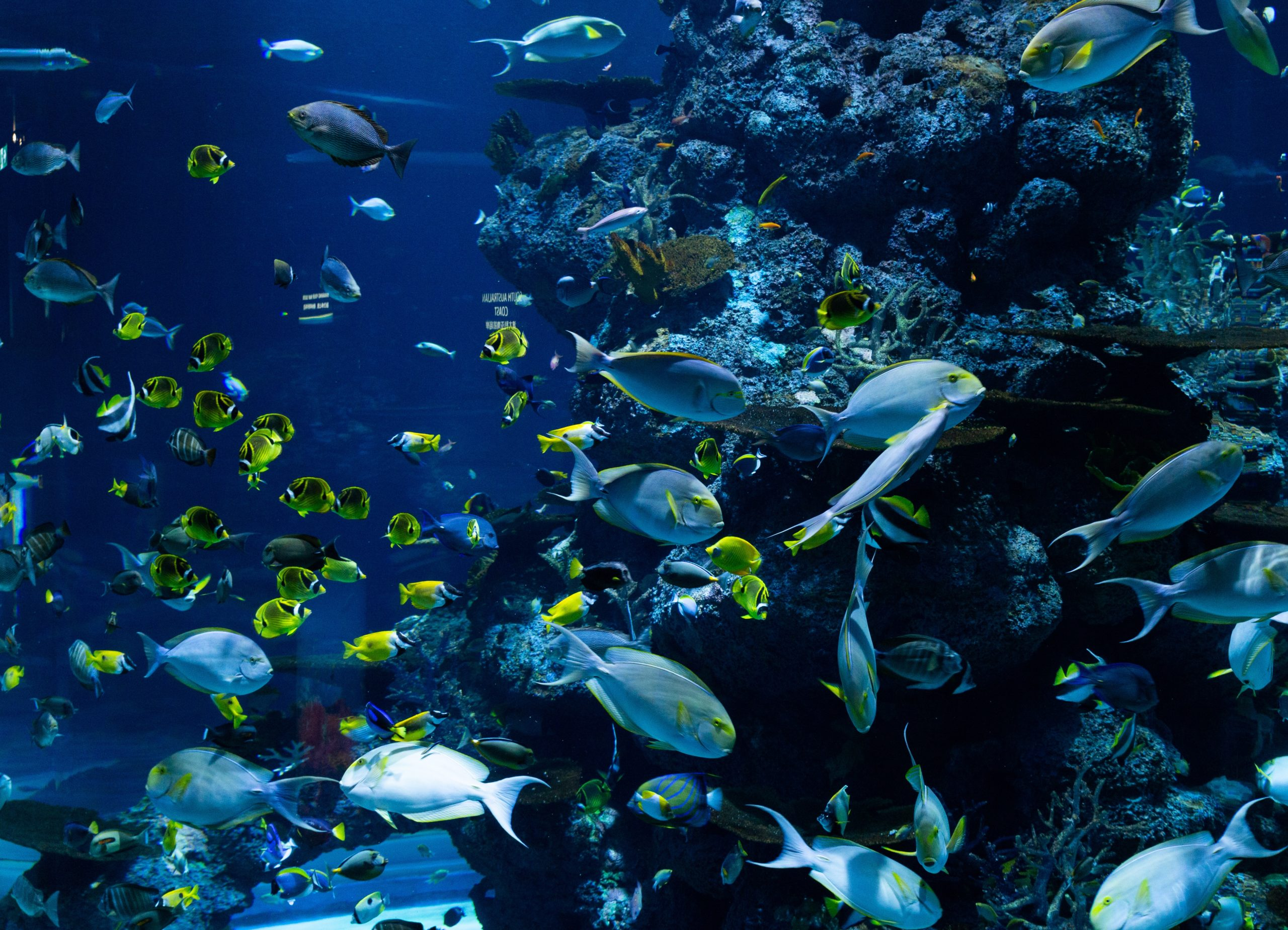 endangered animals in the coral reef